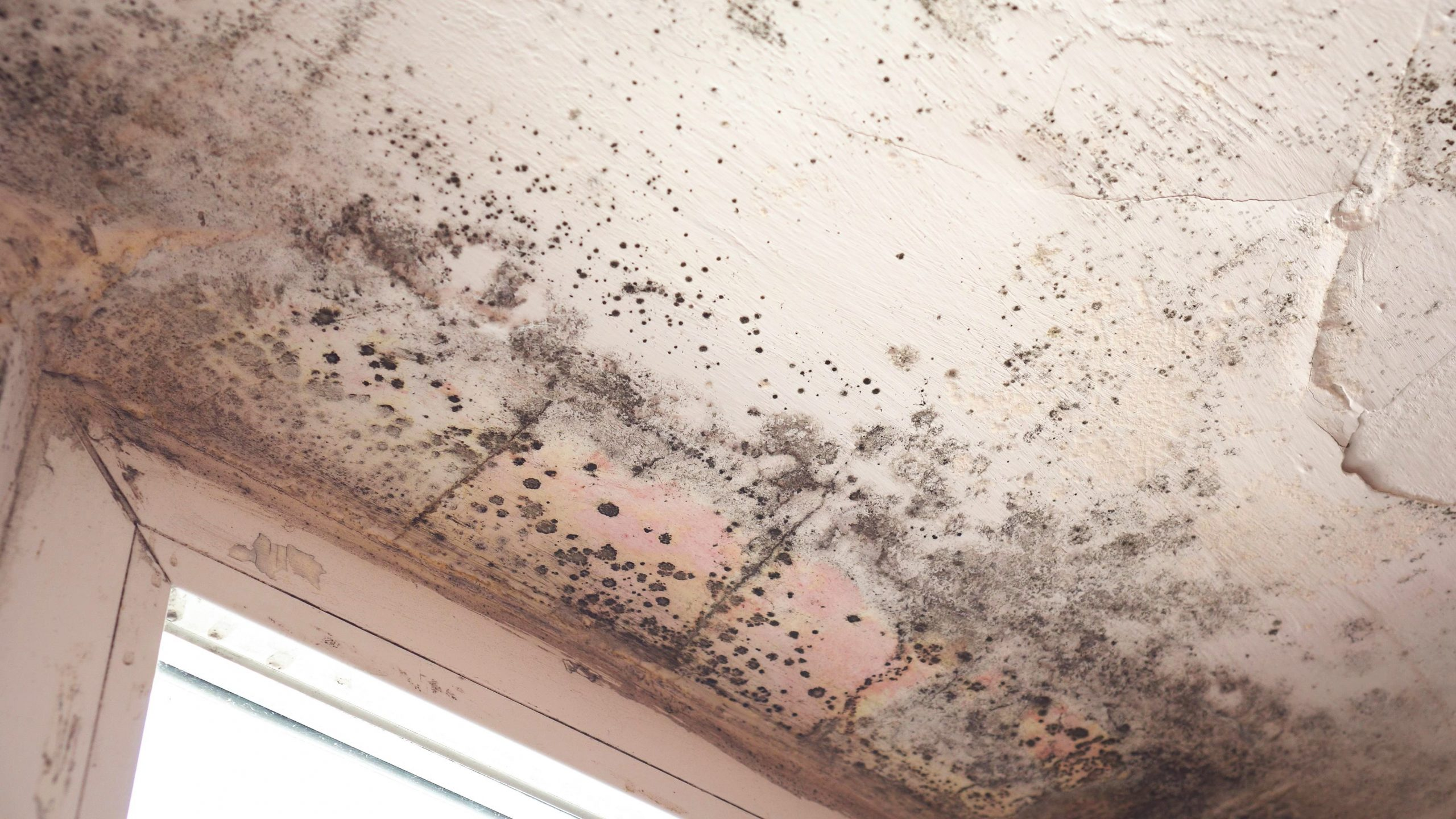 common damp problems in grantham