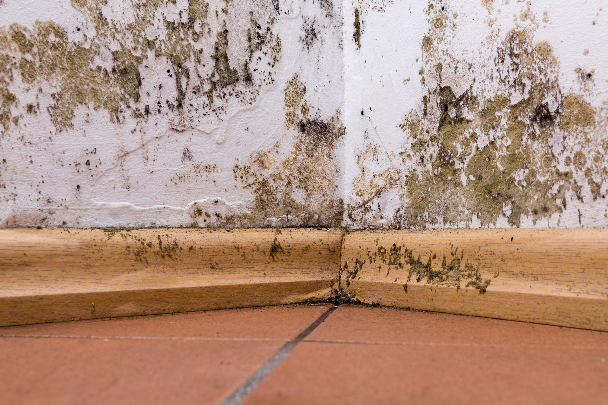 severe rising damp issues